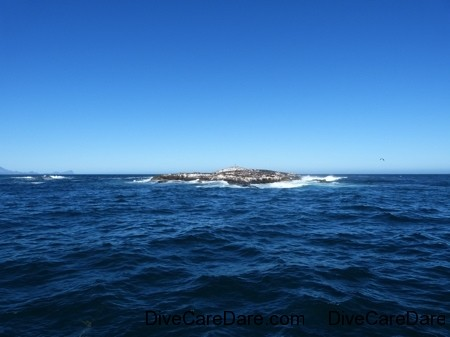 A day with Apex Shark Expeditions and Chris Fallows 50
