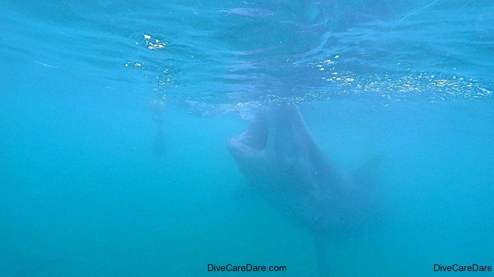 Great White Shark Tours Gansbaai South Africa caged diving 11