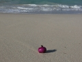 Galapagos-floating onion-deserted beach